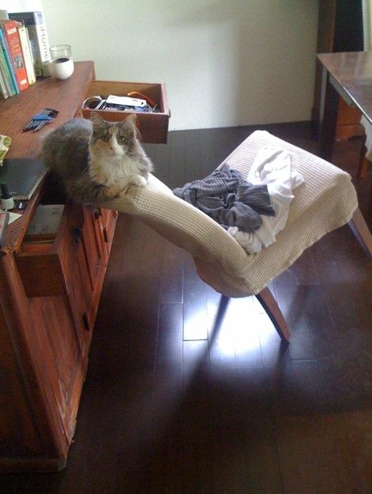 gato-comodo