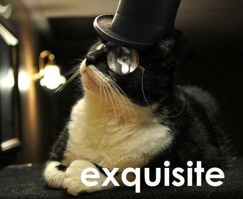 gato-exquisito