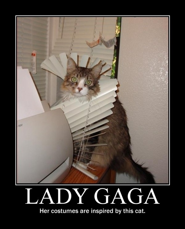 gato-lady-gaga