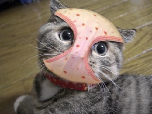 gato-ninja