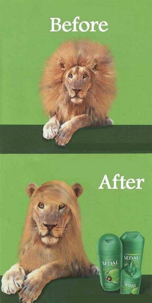 leon-fijador