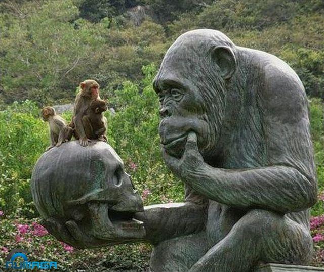 mono-pensante