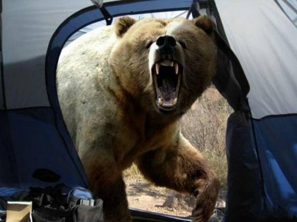 oso-sorplesa