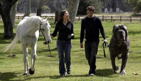 perro-caballo