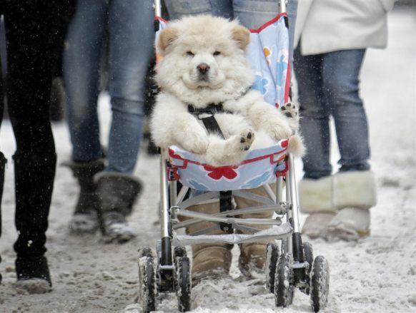 perro-cuna