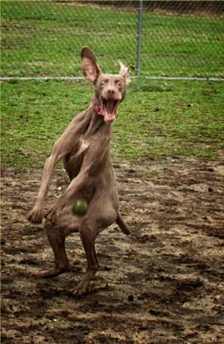 perro-pelotazo