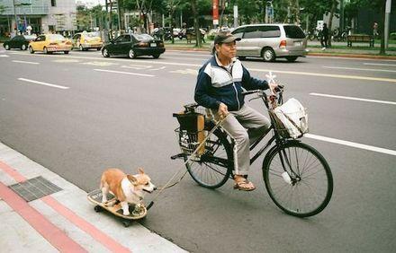 perro-tabla