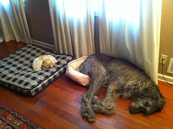 perros-cama
