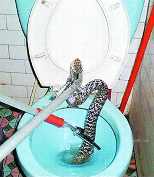 serpiente-lavavo