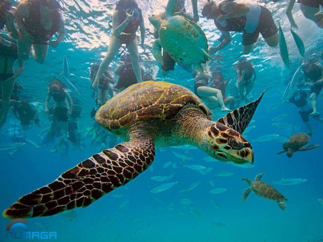 tortugas-molestas