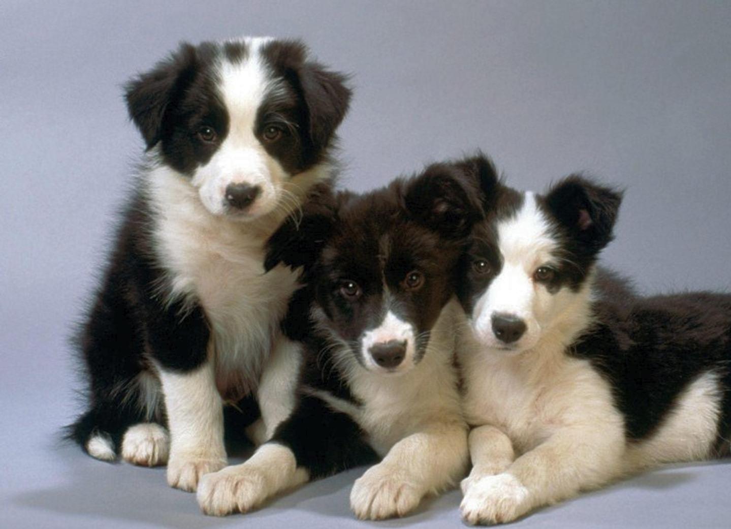 bebes-perros-3