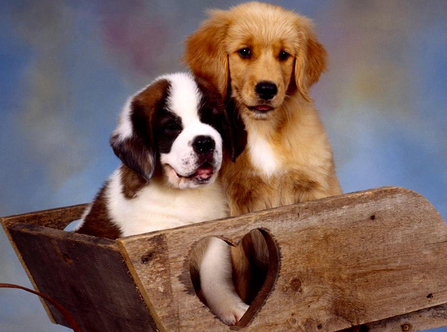 bebes-perros-4