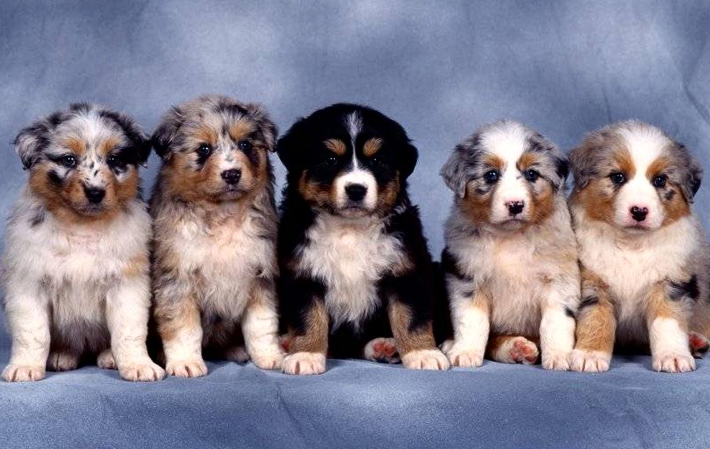 bebes-perros-9