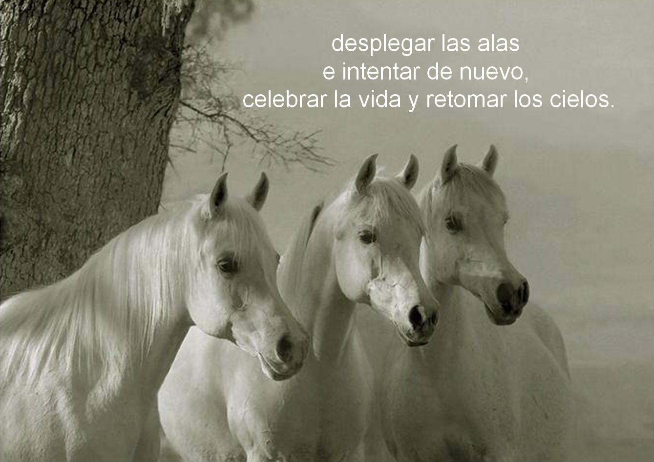 caballos-verso
