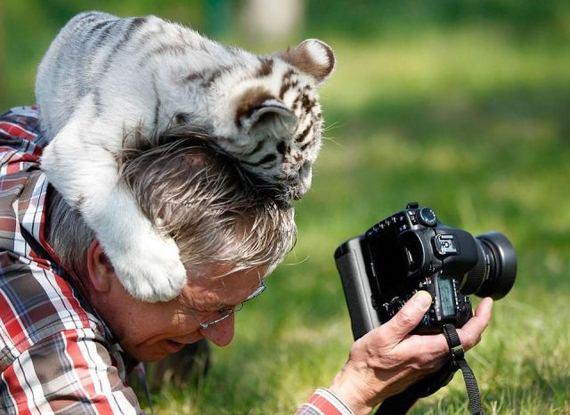 fotografo-tigre