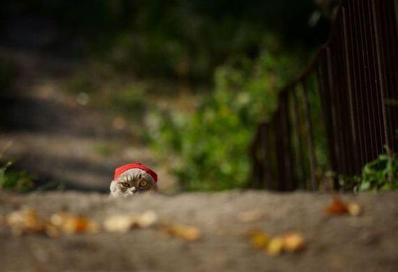 gato-gorro