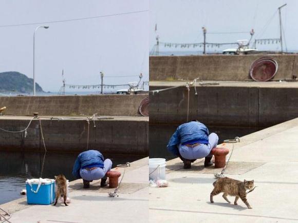 gato-ladron
