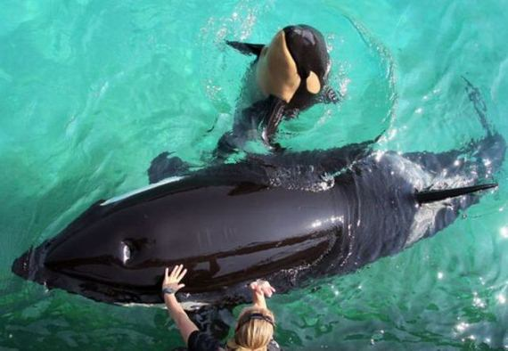 mama-hijo-orcas