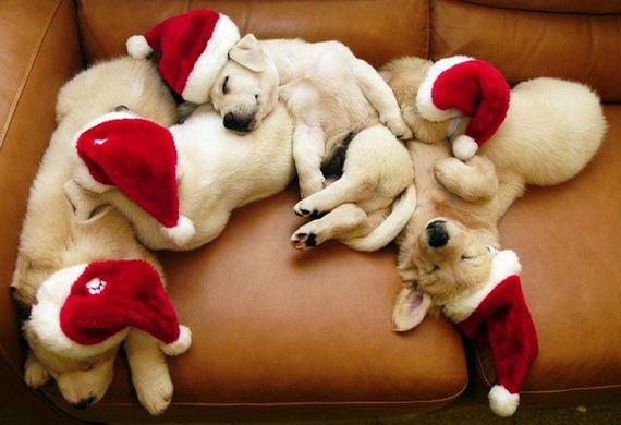 perritos-dormiendo