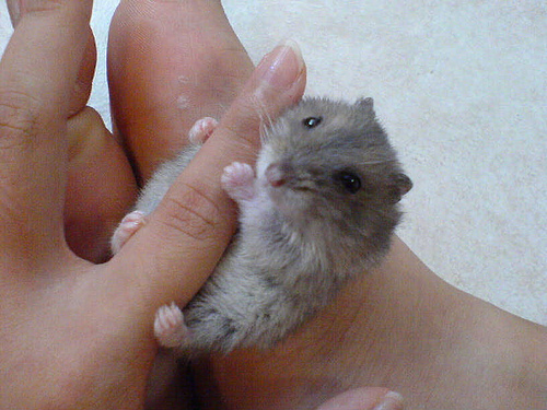 animales-bebes-microscopicos