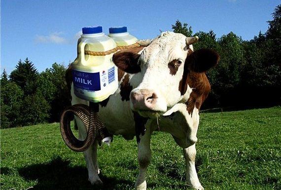 baca-leche