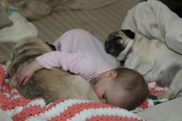 bebe-perros-siesta