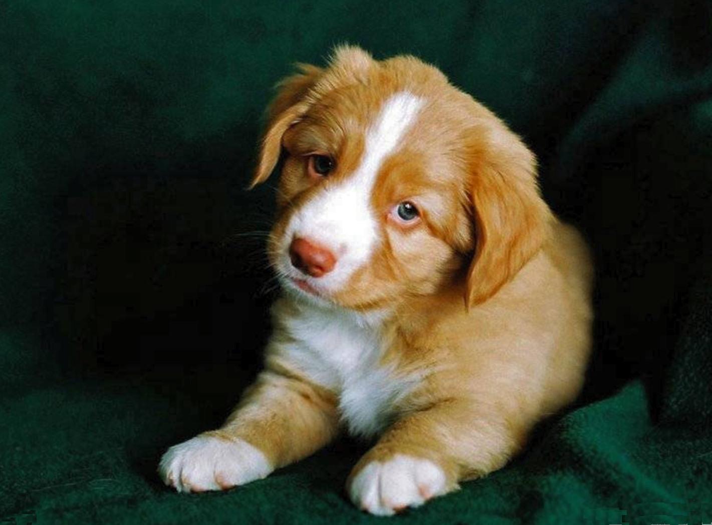 bebes-perros-triste