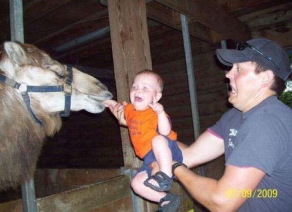 camello-bebe