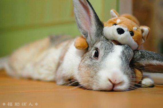 animales-simpatia
