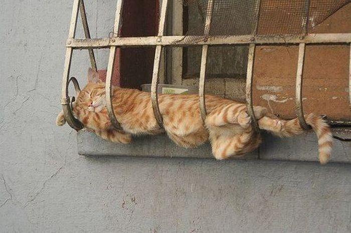 gato-sobon