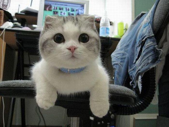 gato-tepille