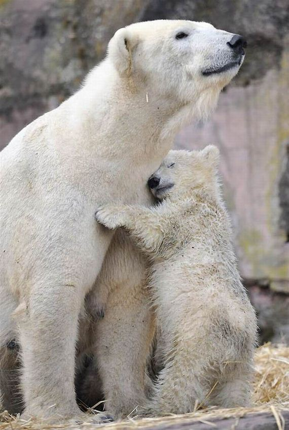 madres-bebes-ternura