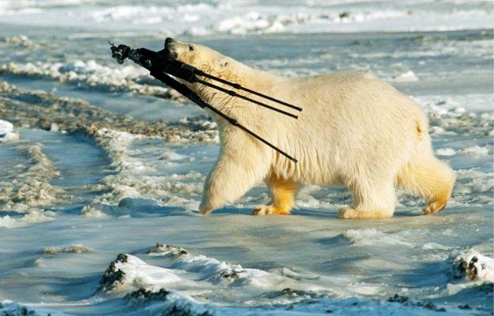 oso-fotografo