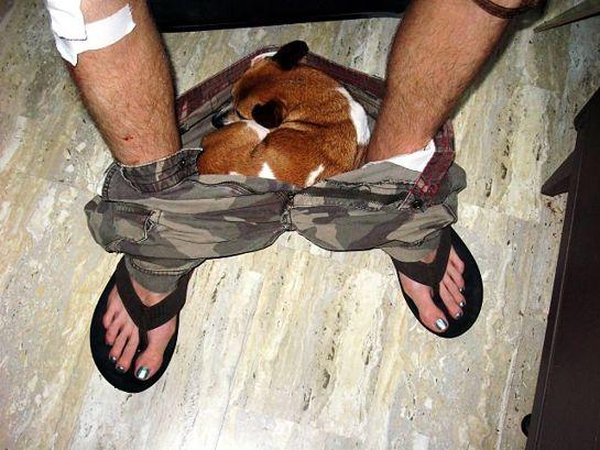 perro-comodon