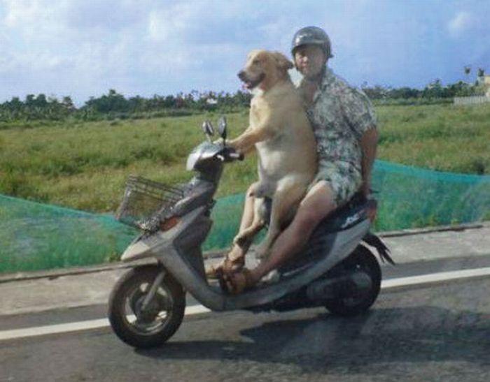 perro-conductor