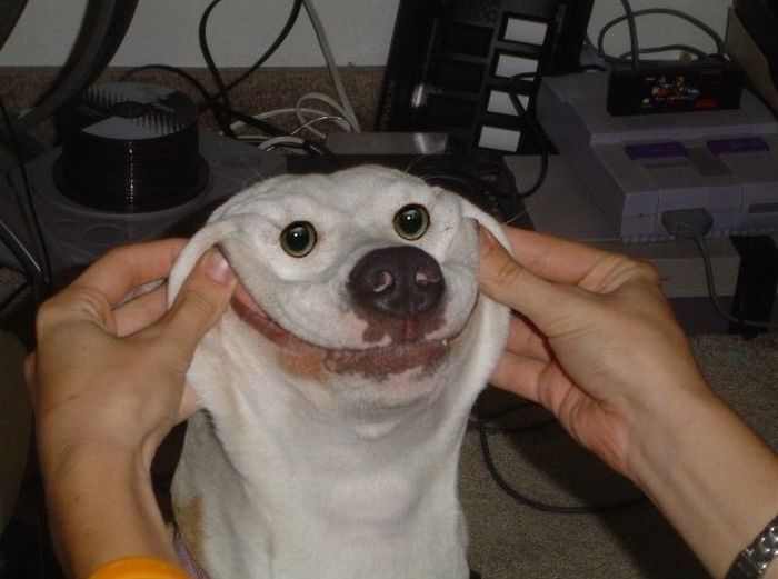 perro-pallaso
