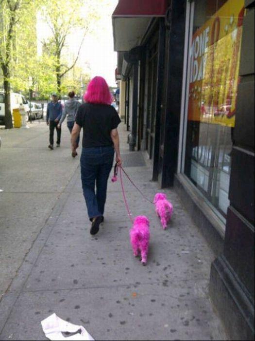 perros-color