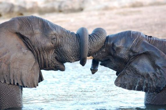 animales bebes adultos