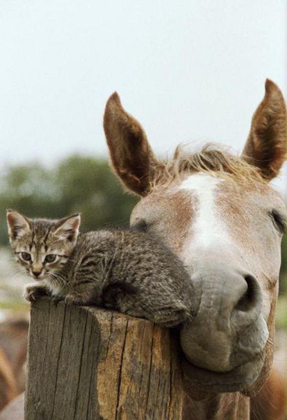 caballo-gato
