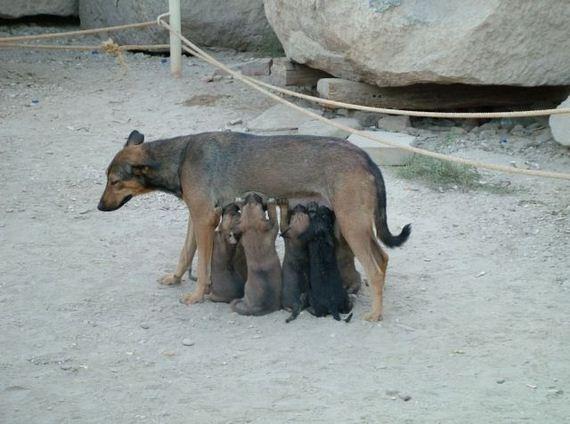 fotos-cuquis-animales-18