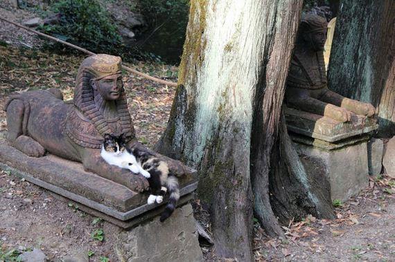 fotos-cuquis-gatos-01