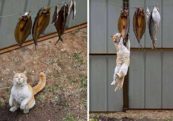 fotos-cuquis-gatos-03