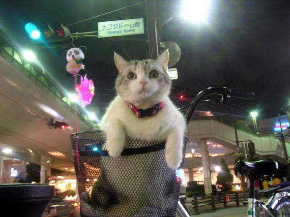 fotos-cuquis-gatos-06