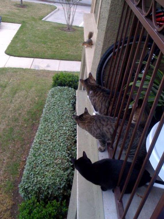 fotos-cuquis-gatos-07