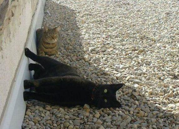 fotos-cuquis-gatos-08