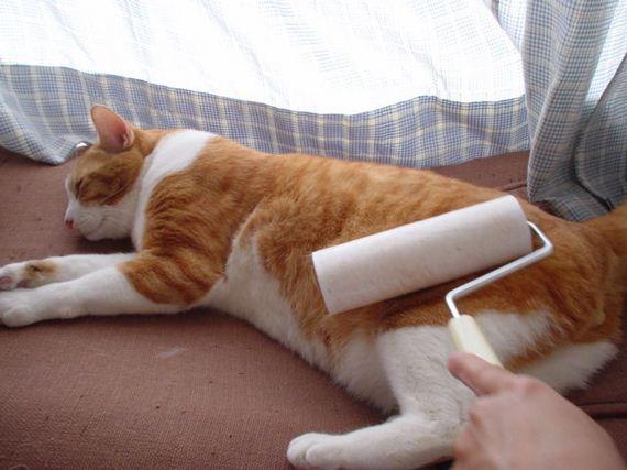 fotos-cuquis-gatos-09