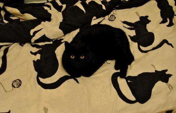 fotos-cuquis-gatos-10
