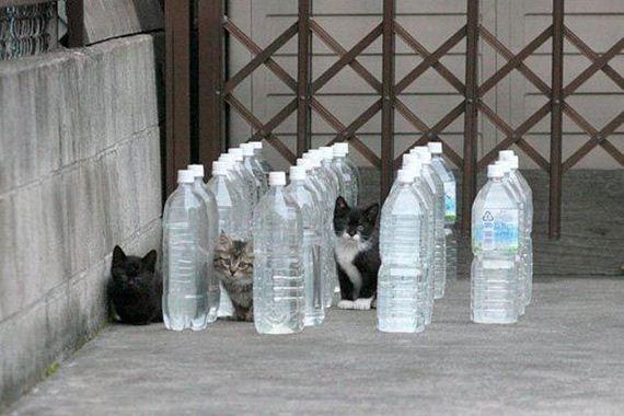 fotos-cuquis-gatos-11