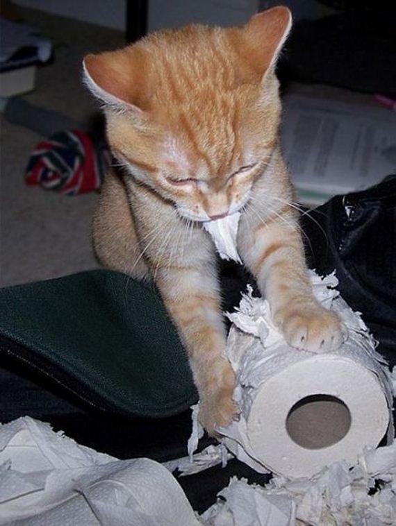 fotos-cuquis-gatos-12