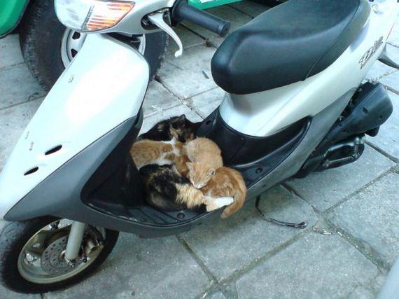 fotos-cuquis-gatos-14